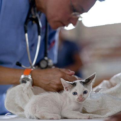 Vaccinating a Kitten
