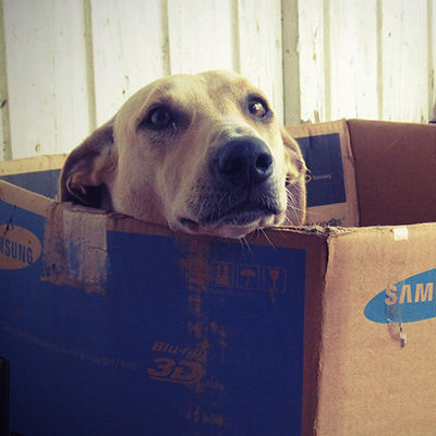 Packing Your Dog